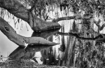 krhodes_Fla_pond_MG_4372